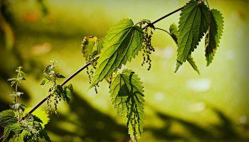 Czego możemy nauczyć się od roślin?