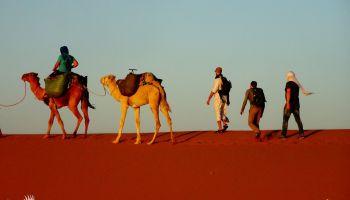W uścisku pustyni