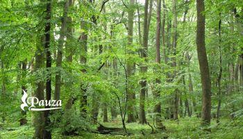 Wiosenne Spotkania z Drzewami - Powrót do Przestrzeni Miłości
