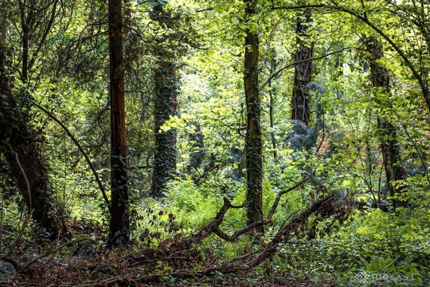 Płynąca z lasami: O NAJBLIŻSZEJ OKOLICY/Zdjęcie: Joanna Stoga Photography
