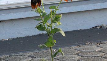 Kwiat na chodniku, czyli asertywność ułatwia życie