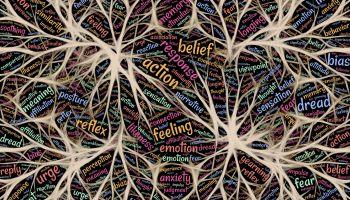 Jak dotrzeć do mózgu emocjonalnego?