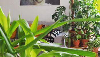 Sprawdzone na wiedźmie: Blisko z roślinami
