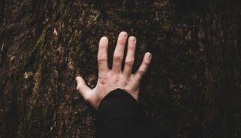 Płynąca z lasami: Czucie na nowo