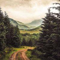 Płynąca z lasami: BEZDROŻA NASZEGO GŁOSU