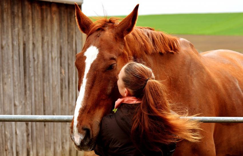 Spokój ma końskie oczy. Spójrz w nie! Narzędziownik rozwojowy