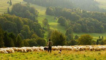 Dlaczego pasterze somalijscy i orlice w gnieździe są szczęśliwe?