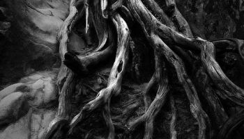 Płynąca z lasami: Dzikość i radość życia/Zdjęcie: pinterest