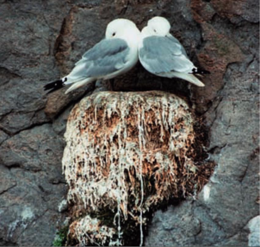 Odkrywanie natury: Kto jest naszym przeciwnikiem?