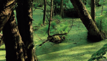 Odkrywanie natury: Czym są głębokie pytania i po co je sobie zadawać?