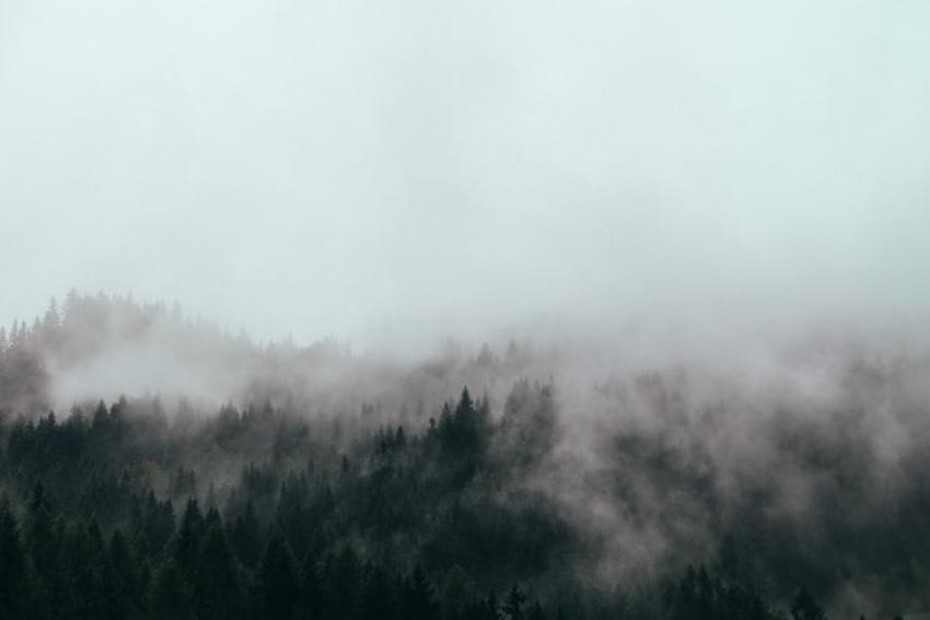 Płynąca z lasami: O WDZIĘCZNOŚCI/Zdjęcie: Brina Blum