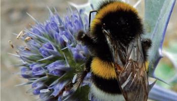 Odkrywanie natury: Czy przyrodzie należy pomagać?