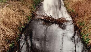 Ziemia - mój jedyny dom: Wody i tereny podmokłe