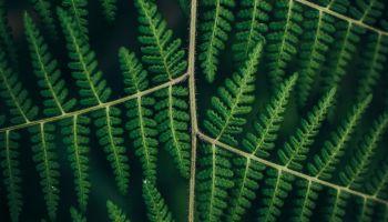 Płynąca z lasami: NASI SPRZYMIERZEŃCY W KRYZYSIE KLIMATYCZNYM/Zdjęcie: Panduior