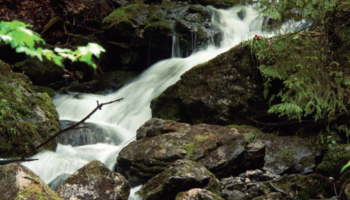 Odkrywanie natury: Czym jest wolność?