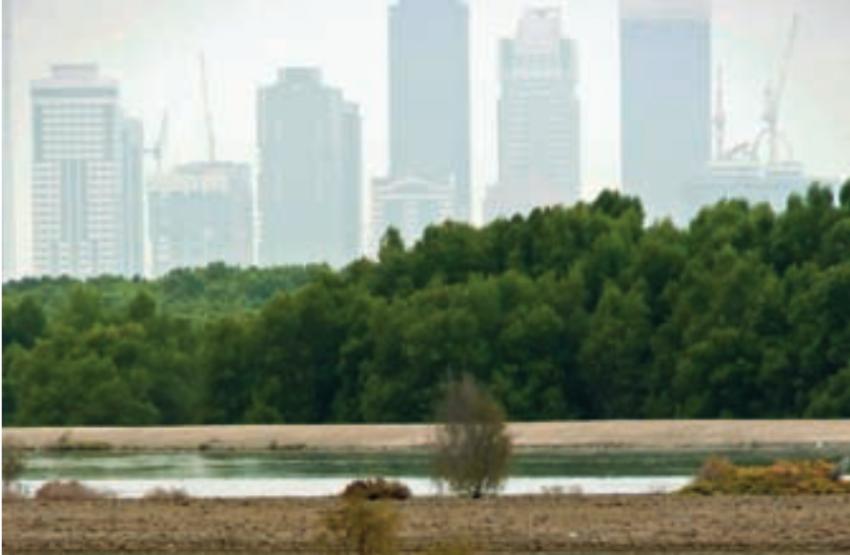Odkrywanie natury: Na czym polega konflikt między potrzebami człowieka a potrzebami przyrody?